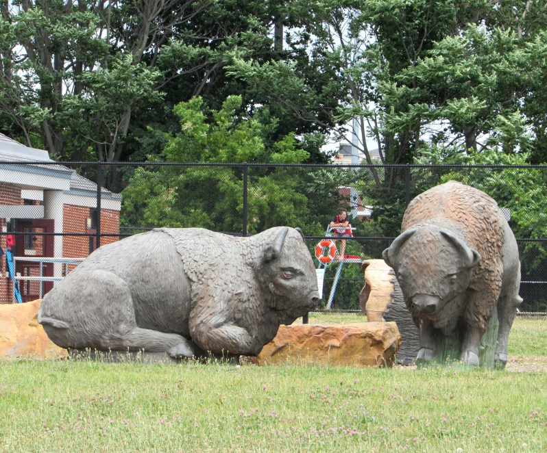 Buffalo Sculptures