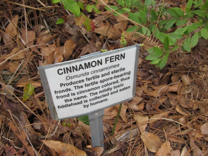Cinnamon Fern Information marker