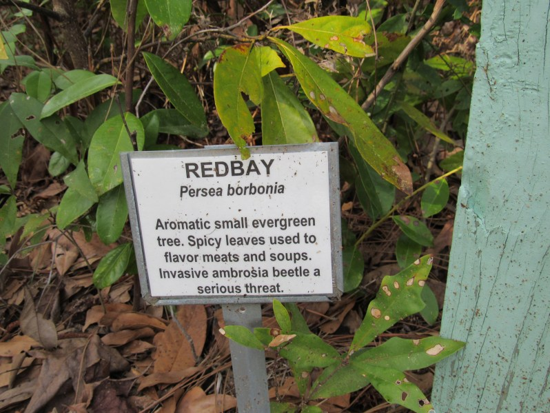 Information marker for redbay