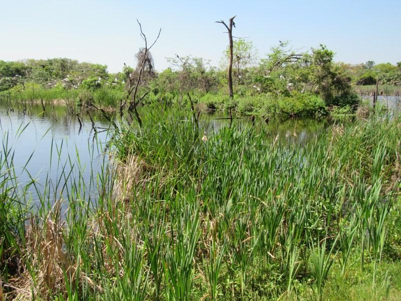 Ibis Pond