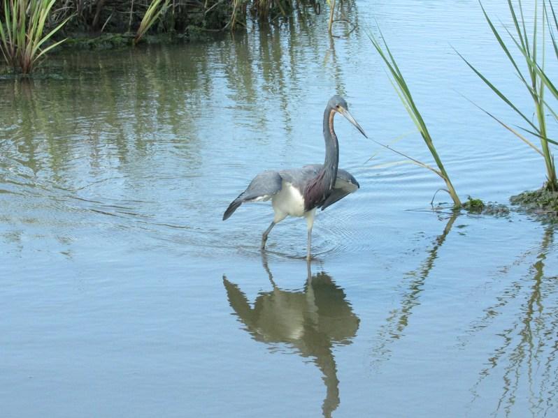 Wildlife on the marsh