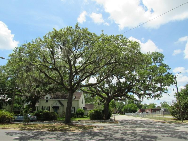 Savannah Trees