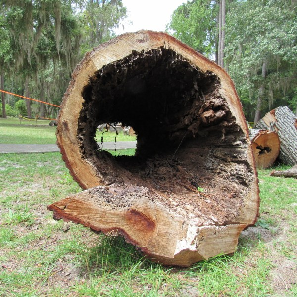 Hollow pine log