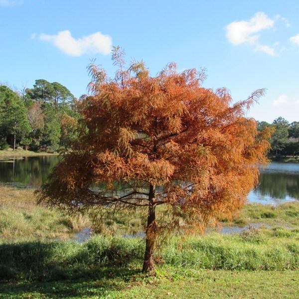 Copper color tree