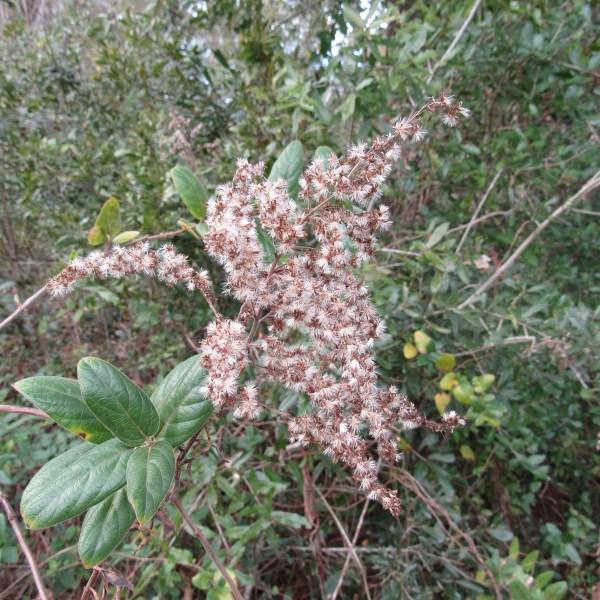 Marsh plants