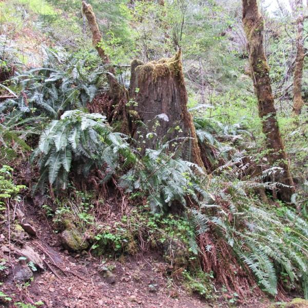 Wild ferns in the forest