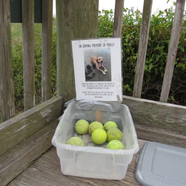 Beach ball bin