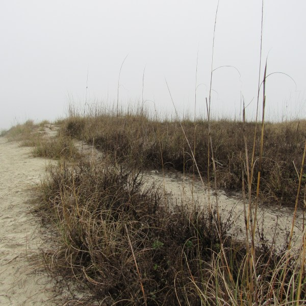 Sandy paths