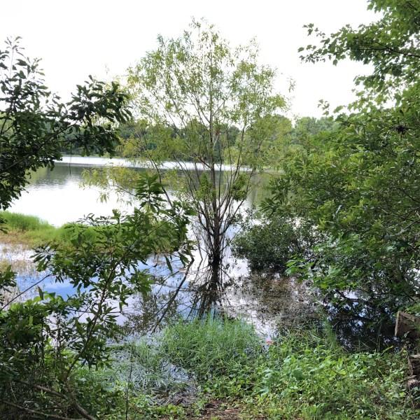 Tree base under water