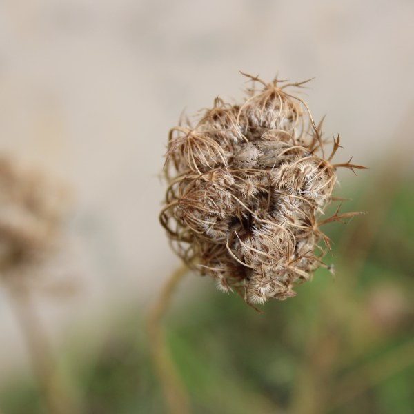 Ball of spikes