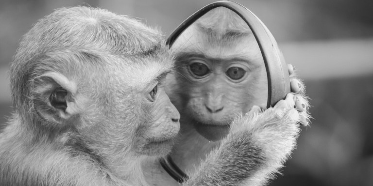 Monkey looking at itself in a mirror