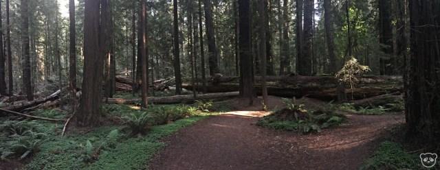 avenueofthegiants_foundersgrove_trees