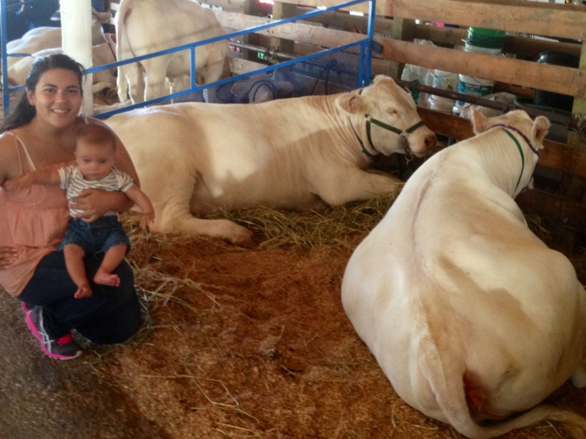 Rides, Animals, and Good Quality Family Time at the Fair (5/6)