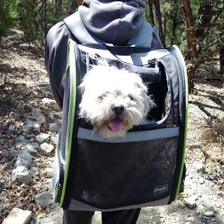 BooBoo in the backpack