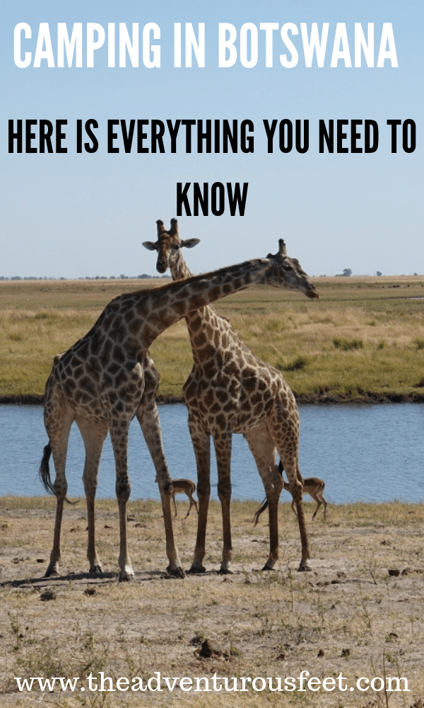 Going to Botswana? Here is everything you need to know before you go camping in Botswana. #Botswanatravel #Botswanacamping #thingstodoinbotswana #thingstotakeforbotswanacamping #campingbotswana