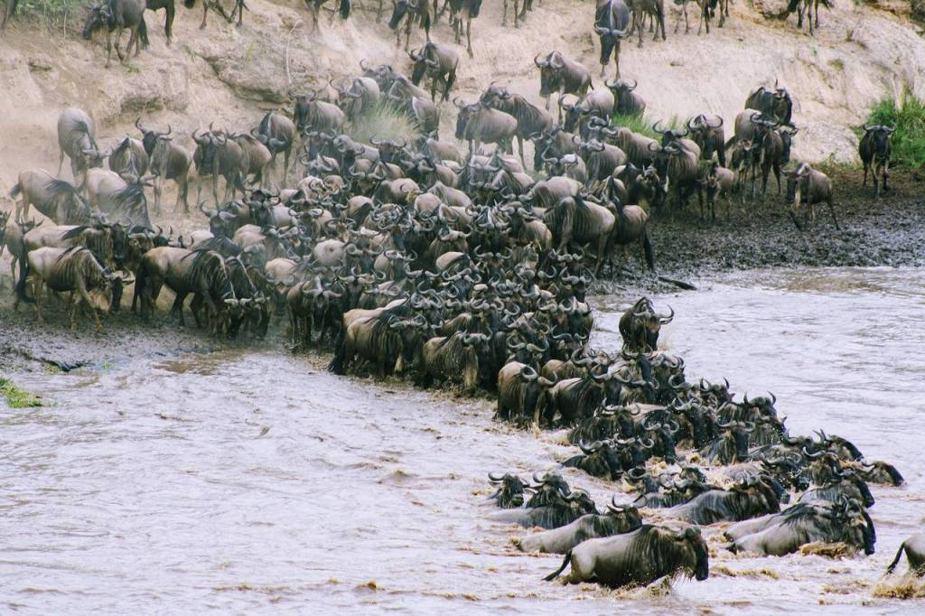 the great migration in masai mara