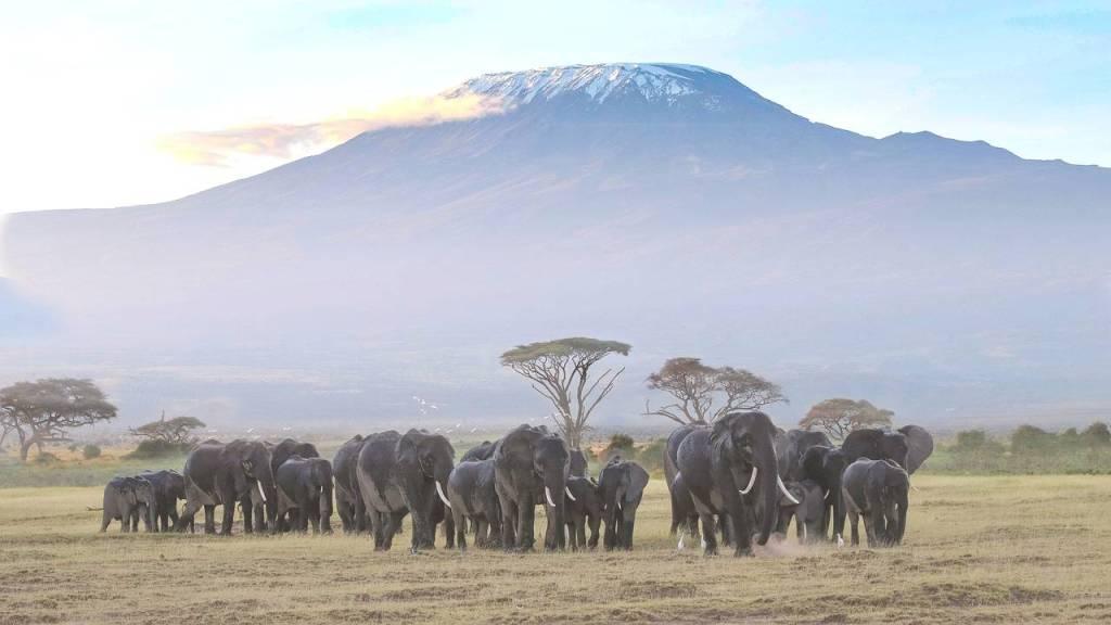 Amboseli National park- where to safari in Africa