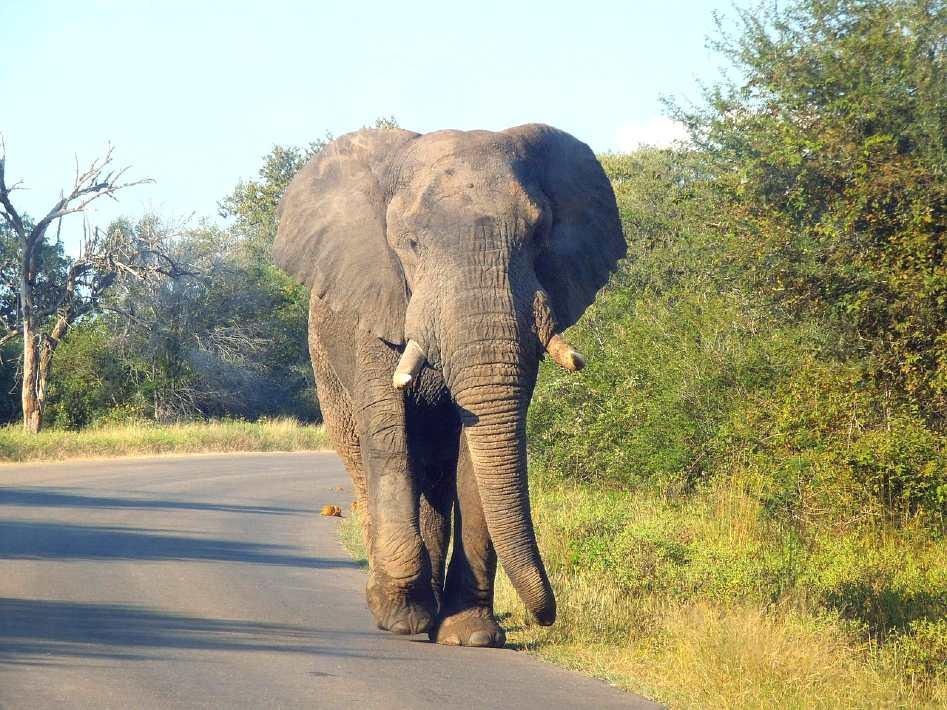 Kruger national park - best national parks in africa