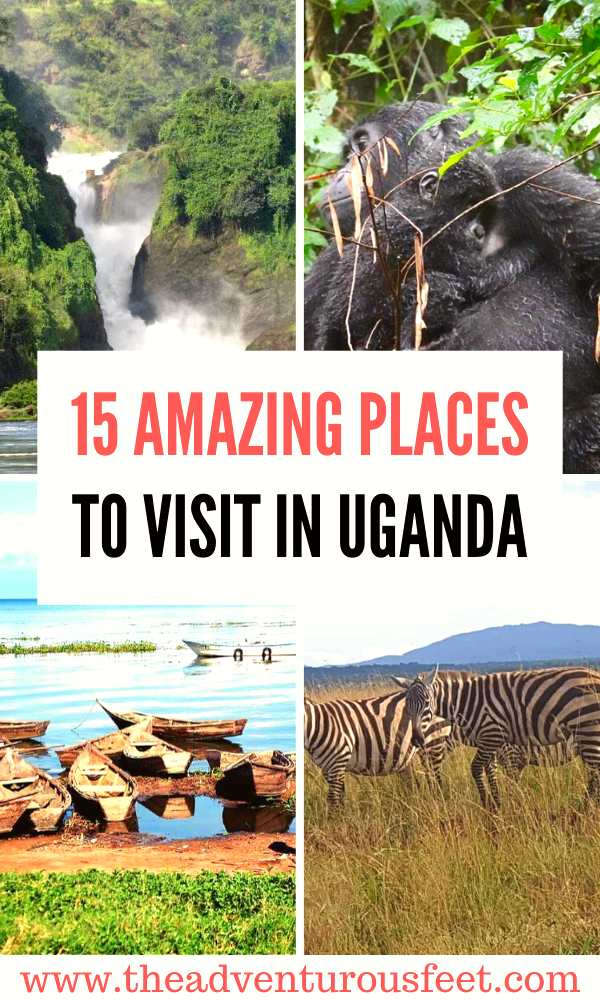 Traveling to the pearl of Africa? Here are the best places to visit in uganda.   top tourist attractions in uganda   things to do in uganda   beautiful places in uganda   safari destinations in uganda #touristattractionsinuganda #bestplacestovisitinuganda #nestnationalparksinuganda #theadventurousfeet