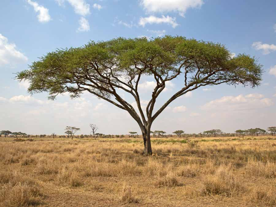 Serengeti National Park is one of the famous landmarks in Africa