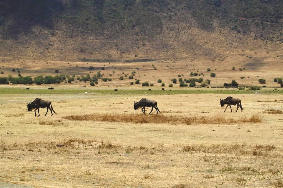 ngorongoro crater lake