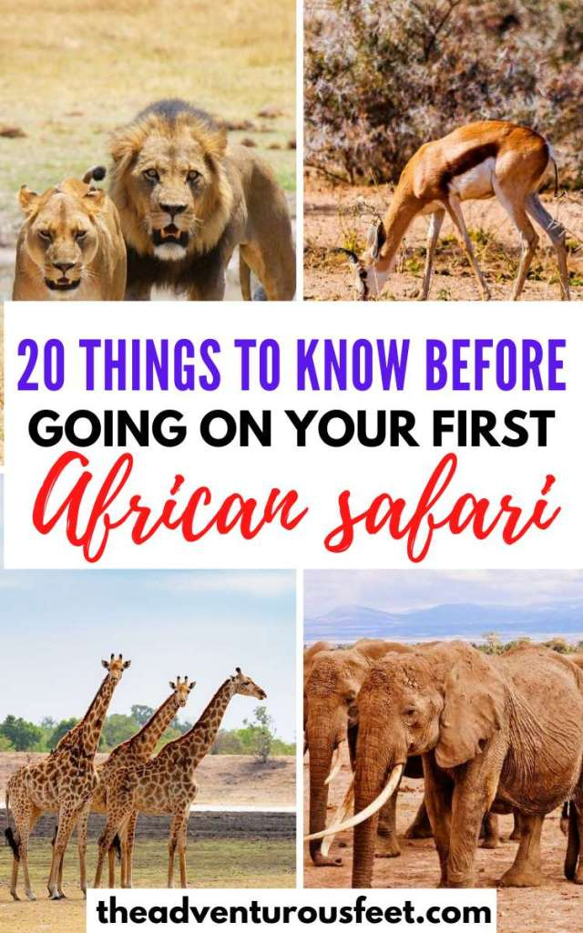 Planning to go for an African safari? Here is everything you need to know  things to know before going on  a safari   African safari tips for first timers  tips for an African safari what to know before going on  a safari  safari tips for Africa  what to do on  a safari  what not to do on an African safari  first time safari tips  hoe to prepare for an African safari #africansafaritips #tipsforafirstsafariinafrica #theadventurousfeet #africansafari