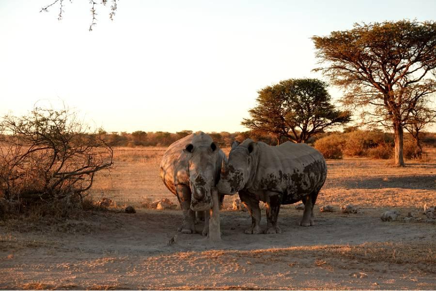 Khama Rhino Sanctuary is one of the best national parks botswana