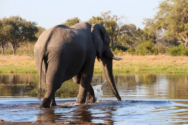 9 Best National Parks in Botswana to Visit for an Incredible Safari
