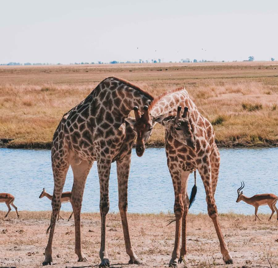 Chobe national park is one of the best national parks in Botswana