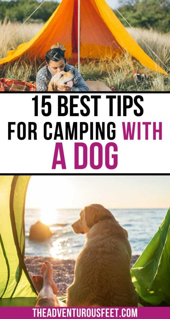 Planning to go camping with your dog? Here are the best tips for camping with dogs that you should know. | tips for camping with a dog| camping with a dog tips| dogs and camping tips| tent camping with dogs tips| taking your dog camping tips| camping with dogs hacks| camping gear for dogs| dog camping gear| camping with a dog hacks| camping with a puppy tips| puppy camping tips| tips for camping with a puppy| how to camp with a dog| how to camp with dogs| how to tent camp with dogs