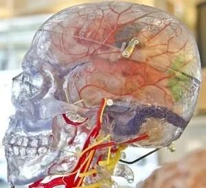 Brain Fitness Tips Memory Loss