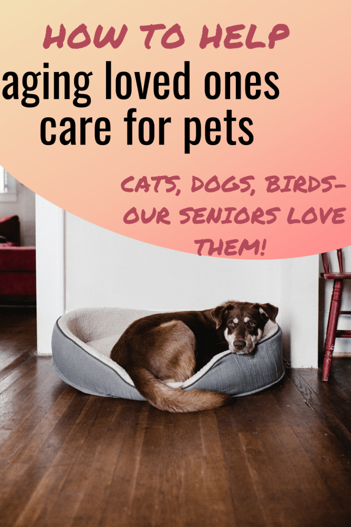 Easy Pet Care for Seniors