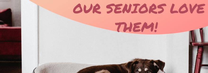 easy pet care for seniors