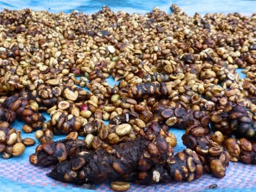 Civet Coffee - Dalat, Vietnam
