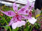 Orchid Farm - Easyrider - Dalat, Vietnam