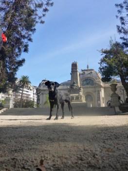 Santiago Chile Street Dog