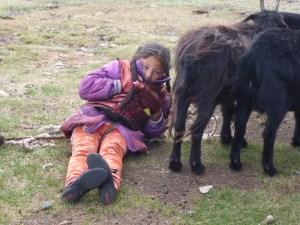 Goats make good wind blocks #Ger Life