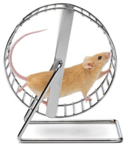 mouse-on-wheel