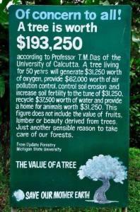 worth of a tree