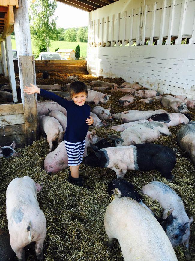 """Han sang """"Stå opp din gris"""" i morges, så gjengen våknet."""