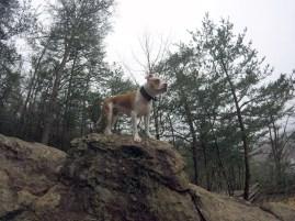 Athena surveying the area