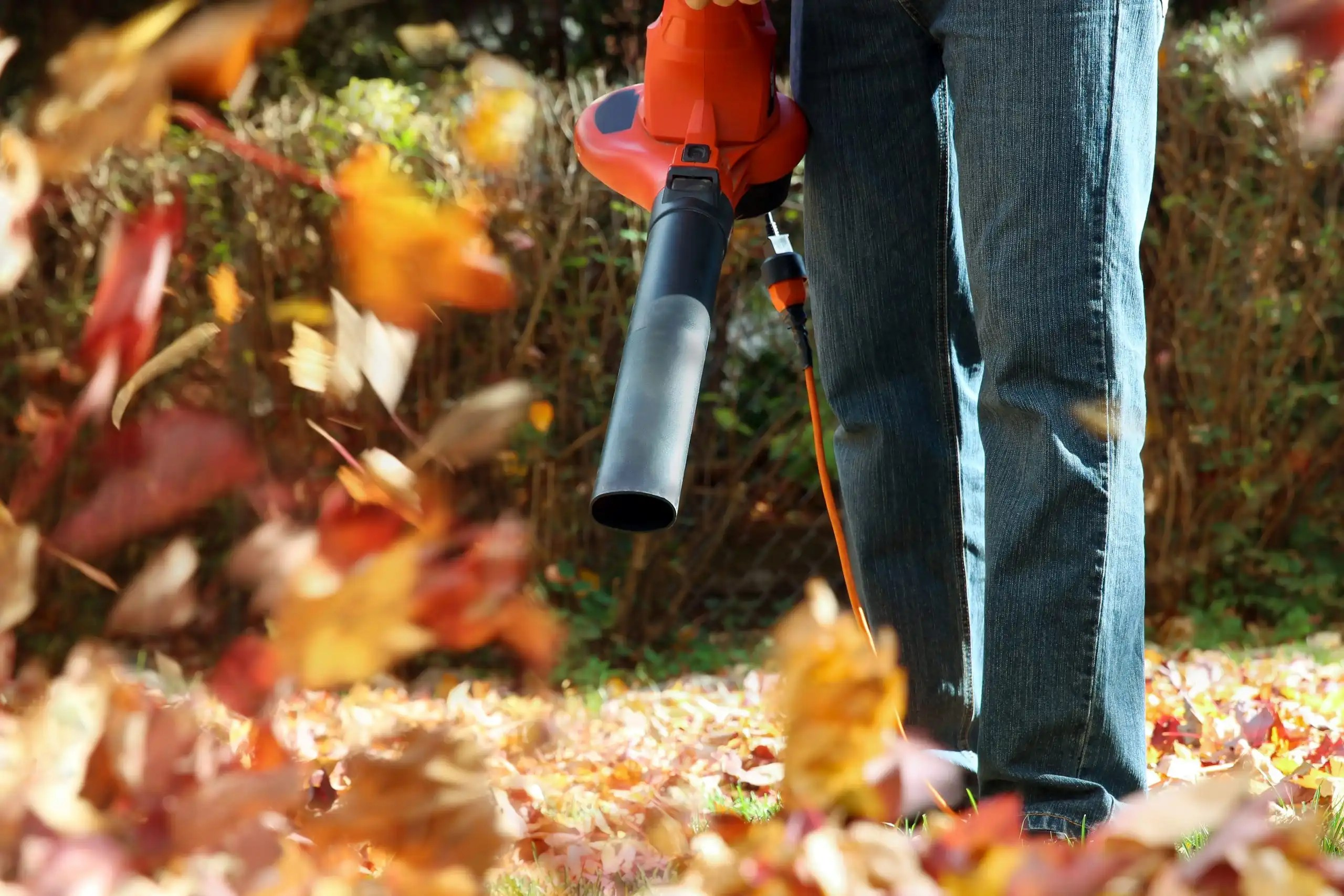 blowing leaves with electric leaf blower in fall
