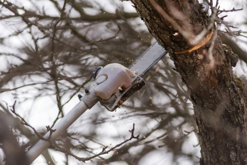 pole saw cutting branch