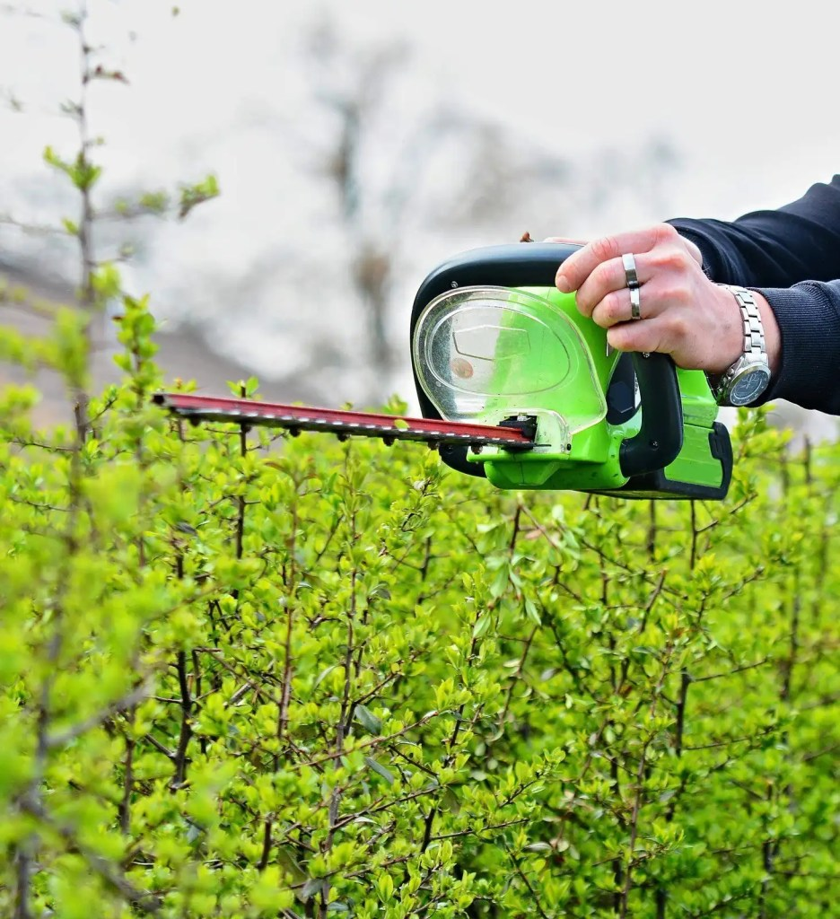 trimming a hedge with a battery powered hedge trimmer