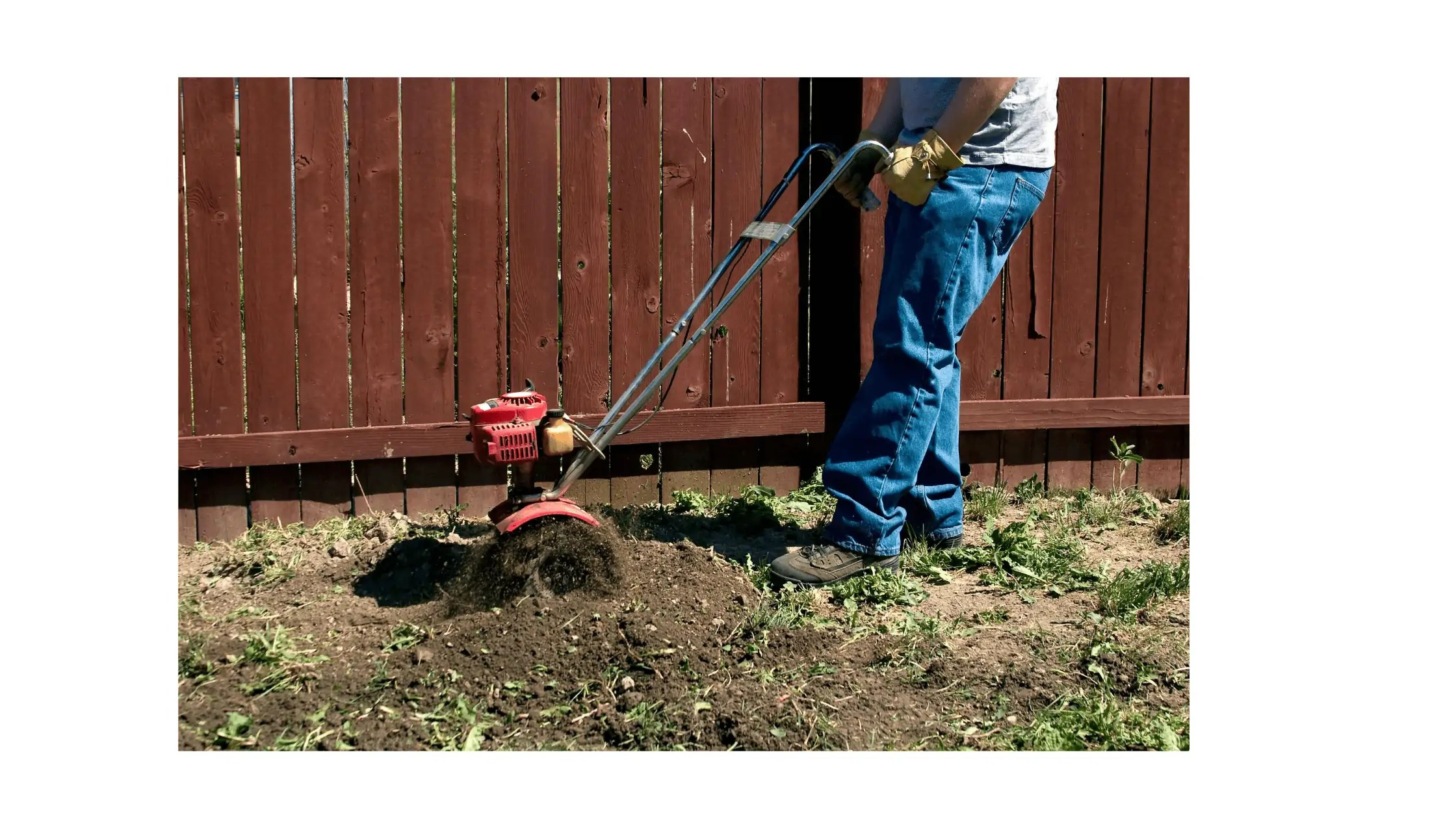 Man tilling garden with small tiller