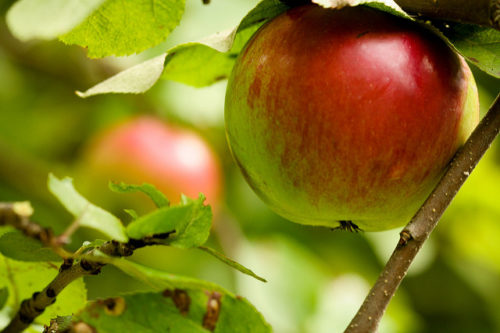 Endowments – Tending the Orchard