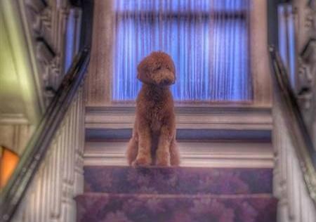 lulu-stairs-e1467830260178