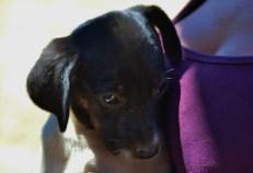 Puppy eyes