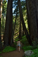 Dwarfed by the trees