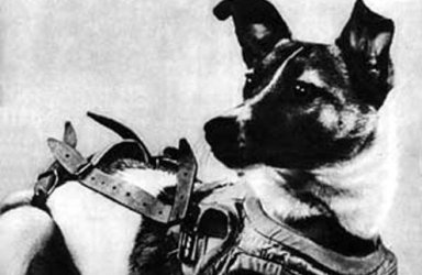 Laika was picked as the occupant of the Soviet spacecraft Sputnik 2 that was launched into space on November 3, 1957.